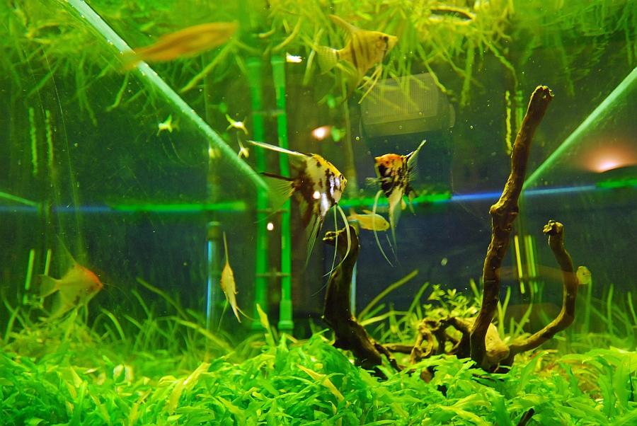Wartezimmer Aquarium, Zahnarzt Wien 1090
