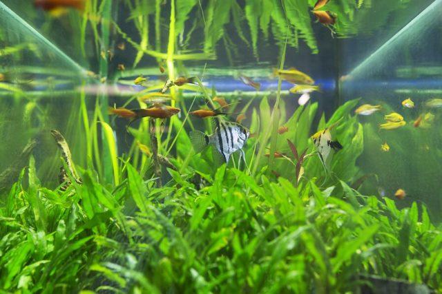 Zahnarzt Wien Fische Nette Ambiente